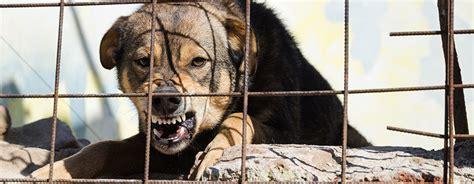 bite lawyer dc bite lawyer animal attack attorneys price benowitz