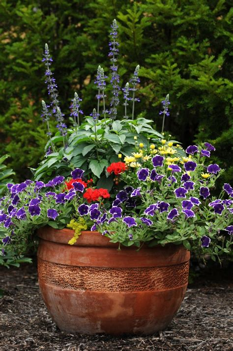 annual flowers in pots www pixshark com images