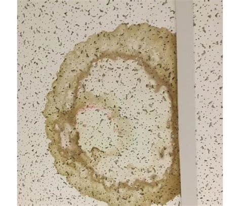 Cleaning Ceiling Tiles Stains - servpro of arcadia gallery photos