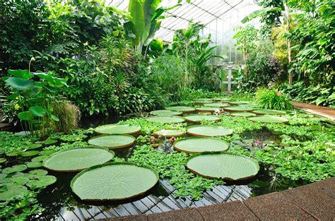 real jardin botanico real jard 237 n bot 225 nico de madrid