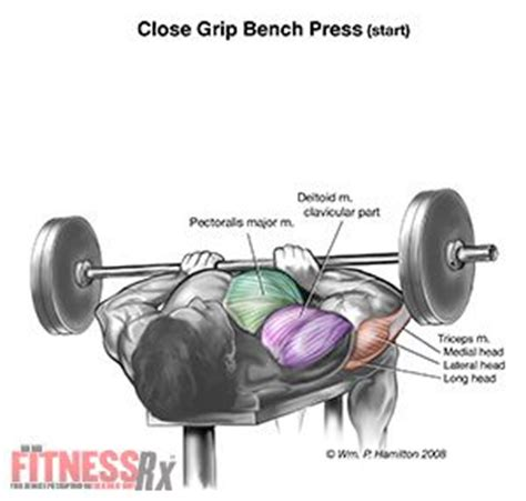 bench press workout for bulk 11 best images about chest exercises on pinterest leg
