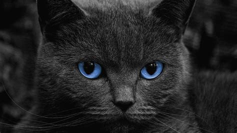 live wallpaper cat apps android black cats live wallpaper android apps on google play