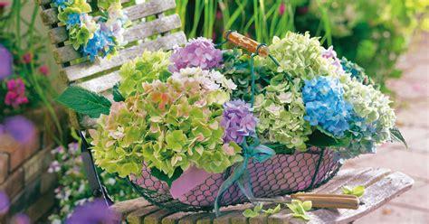 Winterharte Blumen Für Den Garten 897 by Deko Ideen Mit Hortensien Mein Sch 246 Ner Garten