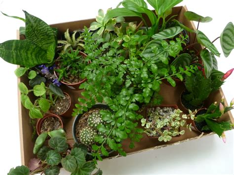 how to make your own green terrarium to keep or give away for the holidays diy terrariums