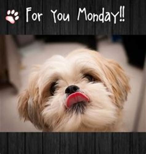 shih tzu birthday meme happy friday morning wonderful friends pictures photos and quotes