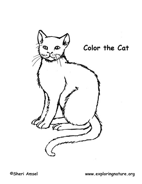 nature cat coloring page pbs nature cat coloring pages coloring pages