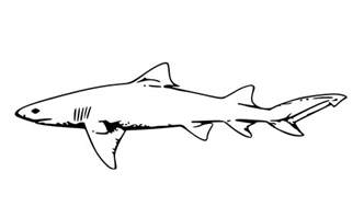 free printable shark coloring pages kids