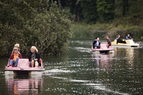 paddle boat rentals golden gate park pinterest discover and save creative ideas