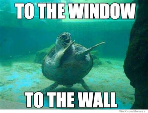 Turtle Meme - to the window to the wall turtle weknowmemes