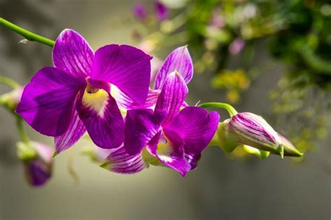 repotting orchids diy network blog  remade diy