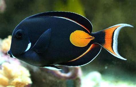 Keranjang Ikan aquarium water http www marinedepot