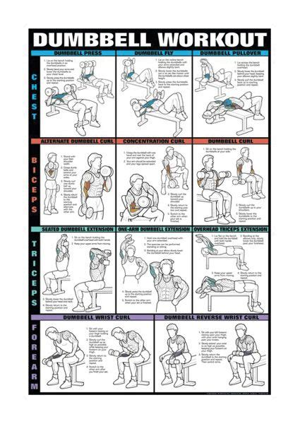 workout routine with dumbbells and bench dumbell workout chart for chest biceps triceps and