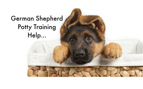 how to potty a german shepherd potty your german shepherd puppy 6 german shepherd housebreaking tips puppy