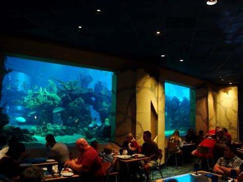 Dining Room Light Fixtures by Dining Under The Sea At The Coral Reef Restaurant All