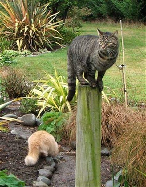 gatti in giardino gatto in giardino foto uno tutto ze 4304