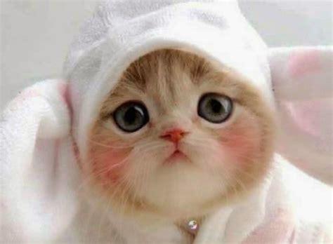 foto kucing lucu imut  bikin gemas