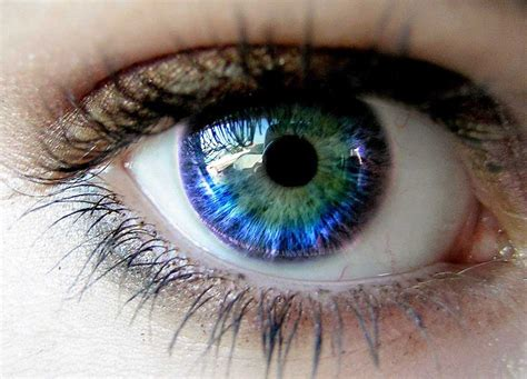 rarity of eye color outrageous facts about human you didn t