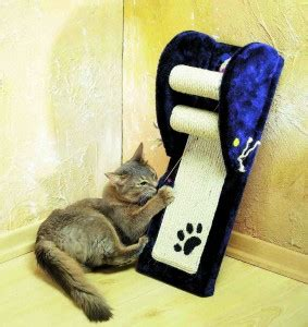 cat clawed leather couch cat lifestyle home claws