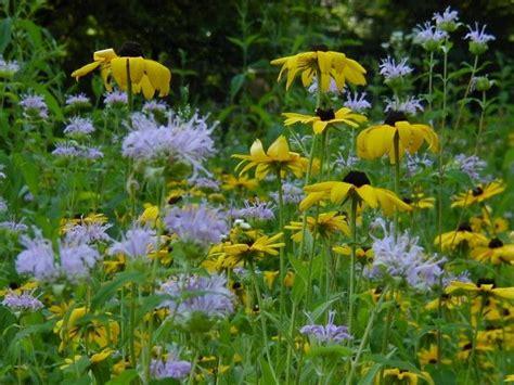 flowering shrubs michigan plant bug blend strange places michigan and