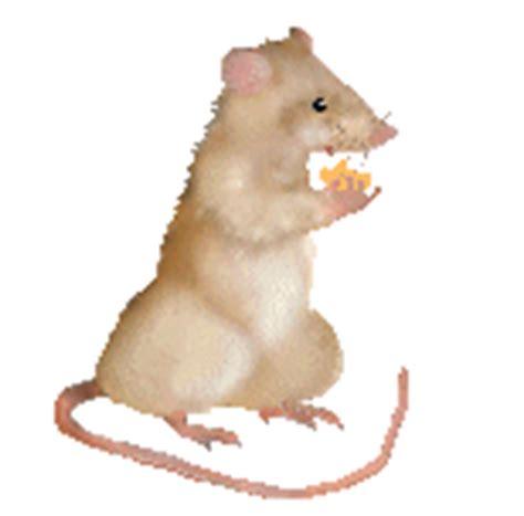 imagenes en movimiento de ratones gifs animados de ratones animaciones de ratones