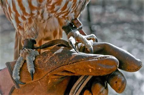 Sarung Tangan Karet Dijual Dimana istilah dalam dunia burung predator bop hewan indonesia