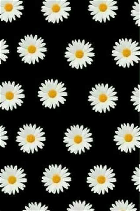 wallpaper bunga tumbrl margaritas wallpaper pinterest margaritas and daisies