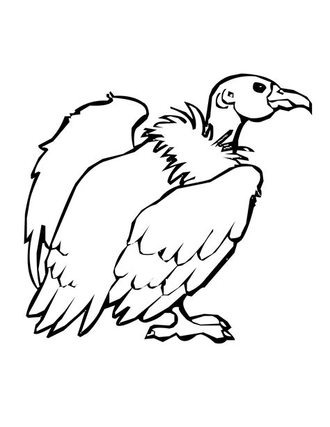 king vulture coloring page bird coloring pages