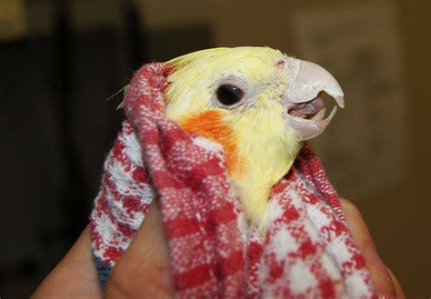 avian bird vet perth bird vet avian vet the unusual