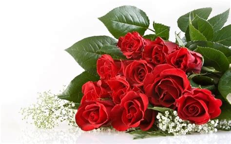 wallpaper bunga mawar yang indah kumpulan gambar bunga yang indah kumpulan gambar