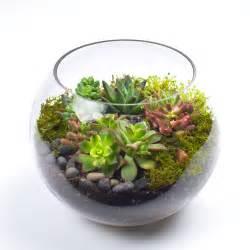 succulent kits the sputnik diy succulent terrarium kit juicykits com