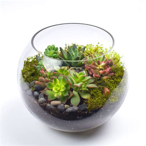 succulent kits the sputnik diy succulent terrarium kit juicykits com