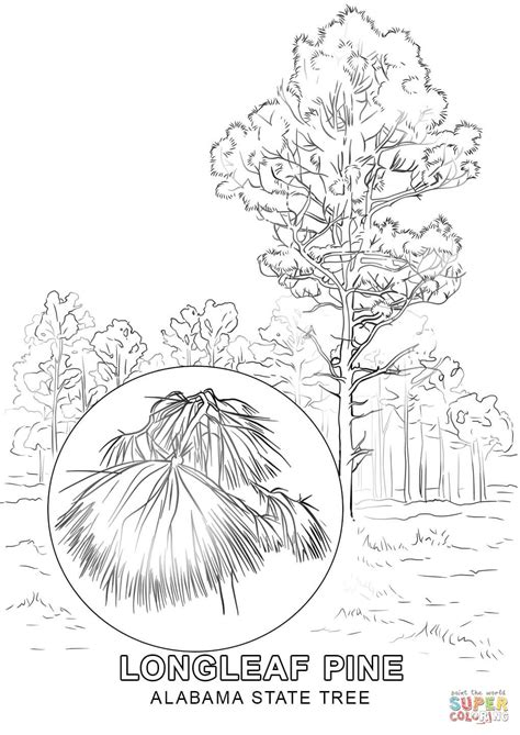 alabama state tree coloring page  printable coloring