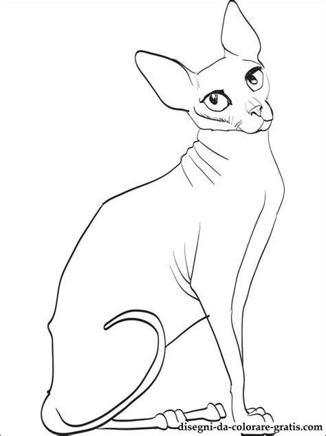 disegno  gatto sphynx da colorare disegni da colorare