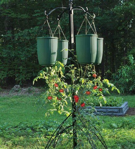 Tomato Hanging Planter by Hanging Tomato Planters A Look At Hanging Vegetable Planters
