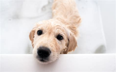 how often do puppies need to how often does your need a bath thankfully bathing your pup doesn t to be