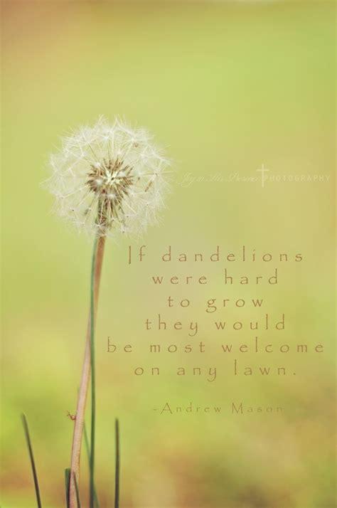 Dandelion Wishes dandelion wish quotes