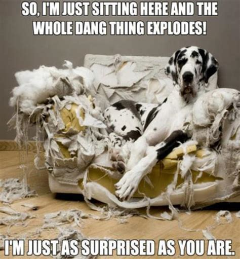 funny couch friday funny exploding couch doggies com dog blog