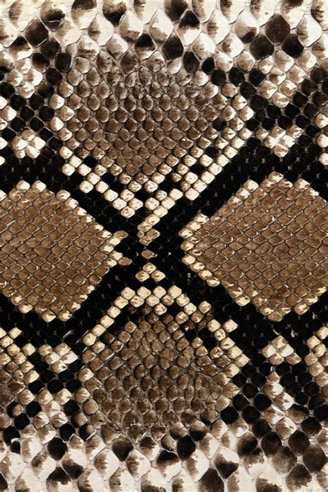 pin texture snake pictures reptiles skin pattern animals wallpaper on best 25 snake skin ideas on snake drawing snake sketch and fish sketch