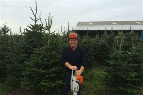 real christmas trees liverpool where to buy a real tree in merseyside liverpool echo