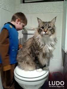 the house cat in the world his