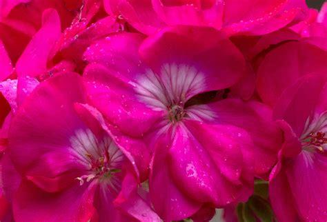 co dei fiori gavirate orari i fiori parco parco dei conigli