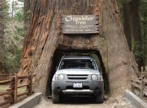 Chandelier Redwood Tree Le Strade Pi 249 Pericolose Al Mondo Ma Anche Spettacolari