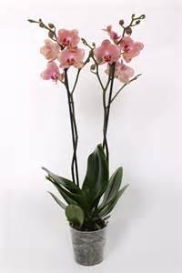 Ficus Interior Arnott Amp Mason Plant Groups Orchids