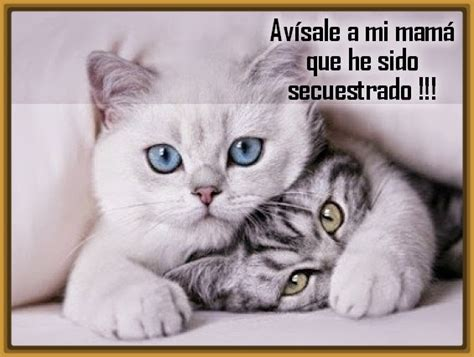 fotos muy graciosas con frases perfectas imagenes de gatos con frases graciosas gatitos