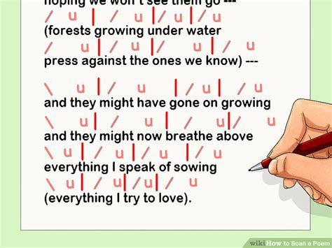 determine the pattern and name of the metrical foot used how to scan a poem 10 steps with pictures wikihow