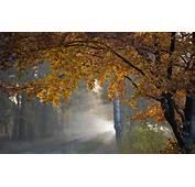 Trees Autumn Fall Roads Rain Wallpaper  1920x1200 28885
