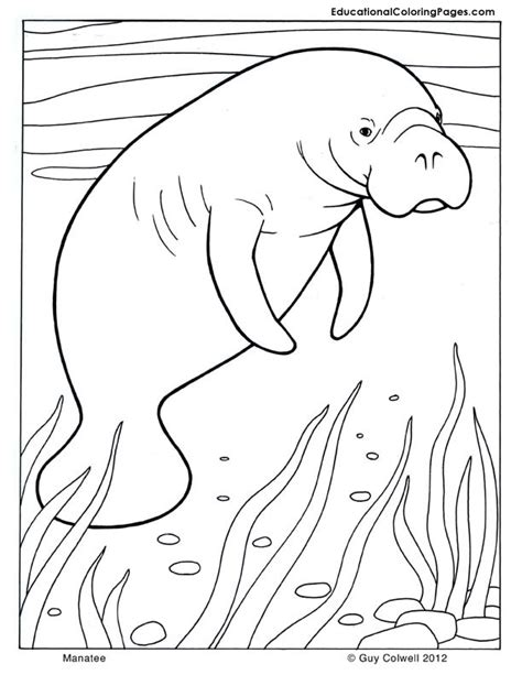 manatee coloring animal coloring pages for kids