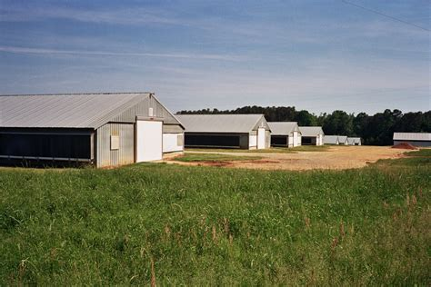 commercial chicken house plans commercial chicken house automated poultry house precise buildings endearing