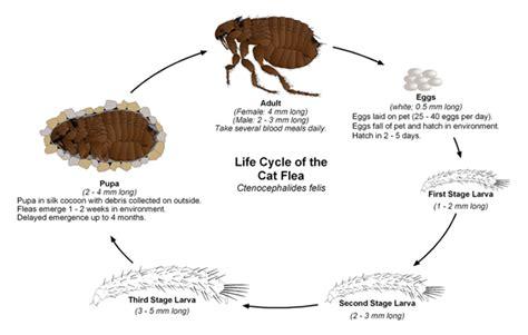 health and entomology purdue biology