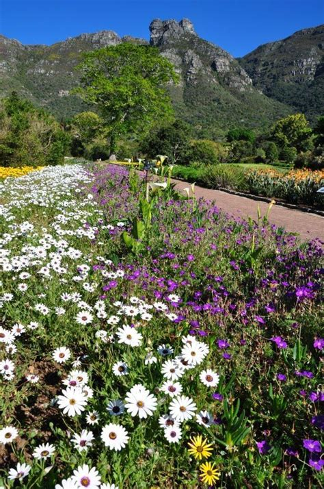 Botanical Gardens Cape Town Kirstenbosch Botanic Gardens Cape Town Western Cape